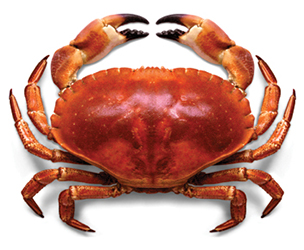 Crustacean Welfare Advocates